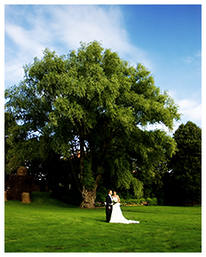 Brudpar vid stort träd i Stockholm